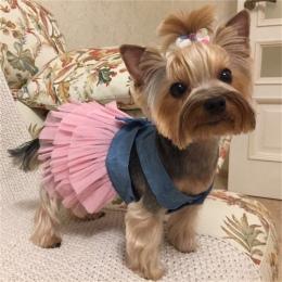 Letnia sukienka dla psów ubrania dla zwierząt domowych dla małych psów suknia ślubna spódnica odzież dla szczeniąt wiosna moda J