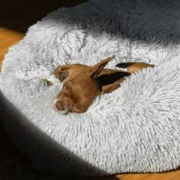 Macaron okrągłe łóżko dla psa Photograp zmywalny kot małe pączki dom dla psa Super miękka bawełna maty kanapa dla psa Chihuahua