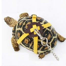 LanLan zwierzęta domowe są żółw trakcji pas kontrola liny pas treningowy do chodzenia dla zwierząt domowych-30