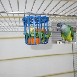 1 PC śliczne ptak papuga podajnik klatka owoce warzywa uchwyt akcesoria wiszące kosz pojemnik zabawki dla zwierząt domowych