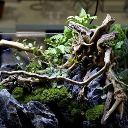 1 PC dekoracyjne akwarium ryby akwarium roślin drewno z morza Fish Tank naturalny pień drzewa drewno z morza akwarium dekoracji