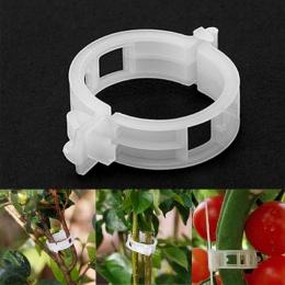 50 sztuk klipy pomidorów krata ogród roślin kwiat warzyw spoiwa sznurka wsparcie dla roślin cieplarnianych klip dostaw