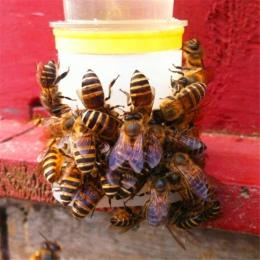 2 sztuk automat do wody Bee Queen Bee sprzęt do wody pitnej łatwa instalacja łatwe w obsłudze narzędzia pszczelarskie