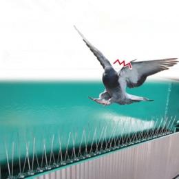2.5 M plastikowe ptak i gołąb kolce anty ptak Anti gołąb Spike, aby pozbyć się gołębie i przestraszyć ptaki zwalczanie szkodnikó
